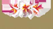 Pure Fiji Coupon & Voucher 2018